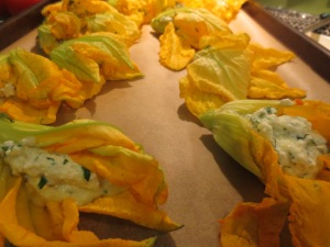 Stuffed Squash Blossoms all lined up